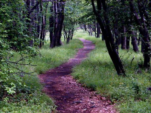היער על הרי המטרה, הונגריה
