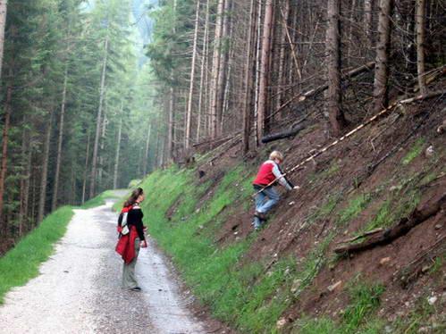 חיפוש פטריות ביער האיטלקי