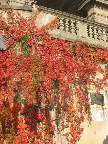 צבעי שלכת בסתיו של פירנצה, איטליה