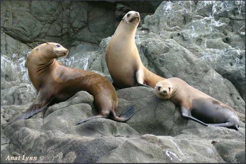 צלילה עם אריות ים במקסיקו GOTRAVEL