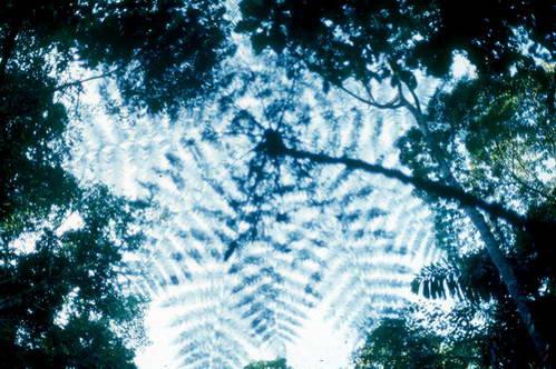 צמחייה ביער הגשם הטרופי, פרו