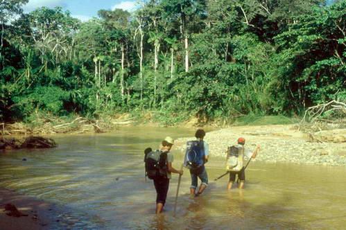 מסע רגלי ביער הגשם של אגן האמזונס