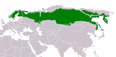 אזורי טייגה ברוסיה וצפון אירופה
