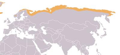 אזורי טונדרה =ברוסיה וצפון אירופה
