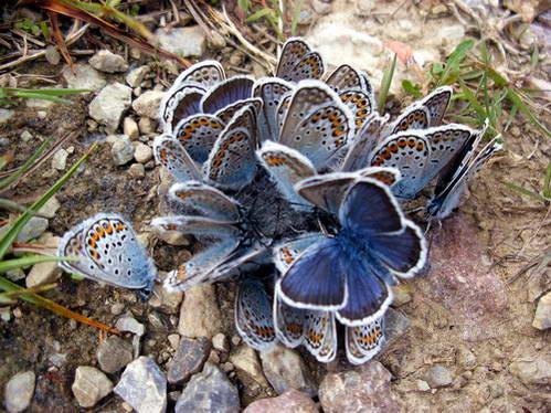 פרחים ופרפרים שפגשנו בדרך, צבעים ממכחולו של הבורא