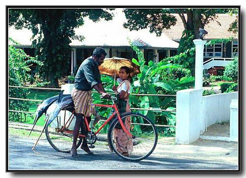 נערה סרילנקית ומוכר הכרישים השכונתי