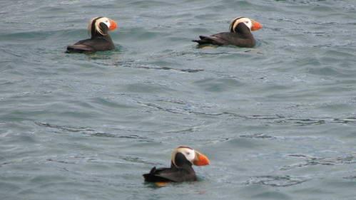 אי הציפורים Gull Island