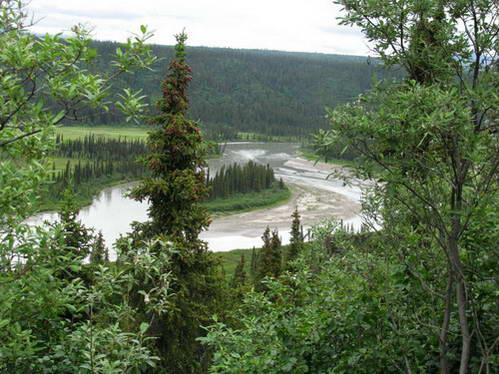נופים ירוקים וכמויות מים עצומות, לצד כביש דנאלי