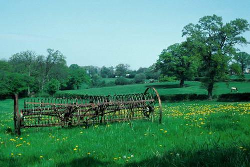 הנופים הירוקים של מחוז דבון, אנגליה