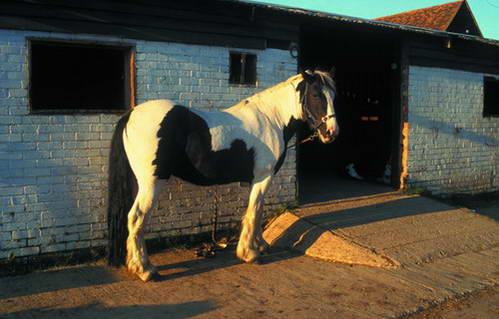 תושבי דבון הם חובבי סוסים ורכיבה, אנגליה