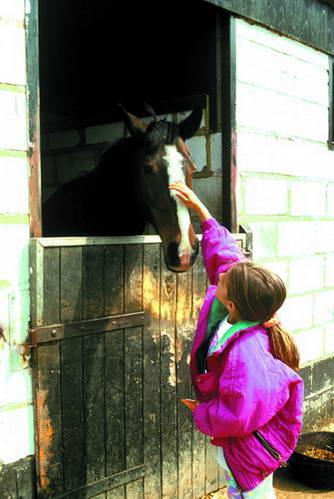 סוסים באנגליה