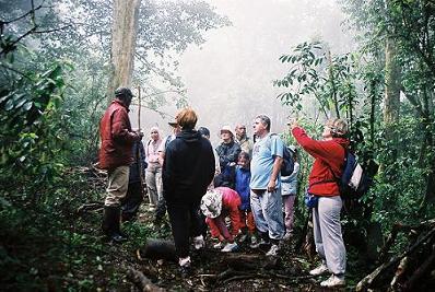 יערות הגשם של אפריקה