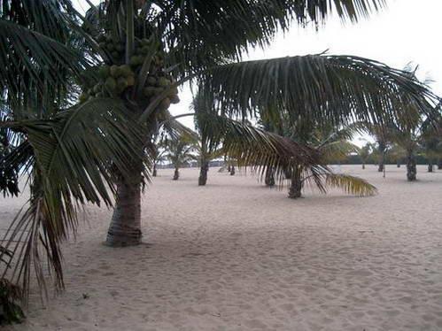 על חוף האגם בבורונדי - חול, עצים ו... היפופוטמים!