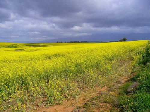 נופים חקלאיים בסביבת קייפטאון