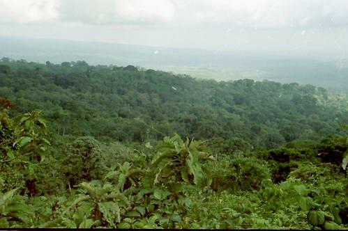יער גשם הררי באזור השימור של רמת נגורונגורו