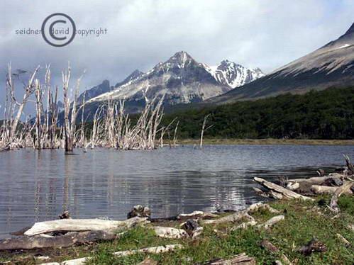 טרק Albino Glacier, אושואיה, ארגנטינה