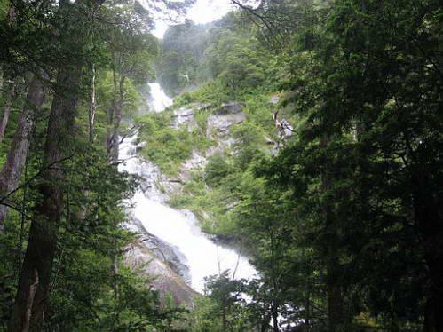 עצי אלרסה, קרטרה אוסטרל, פטגוניה, צ'ילה