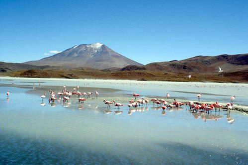 פלמינגו בלגונה ורדה, הלגונה הירוקה במדבר הסלאר בבוליביה
