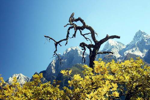 הר הפרח המוזהב מערוץ דילוג הטיגריס