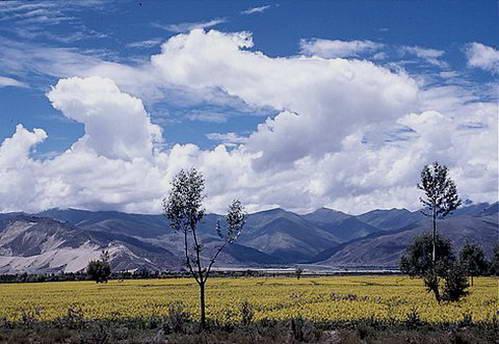 עננים בשמי טיבט, מעל שדה חרדל פורח