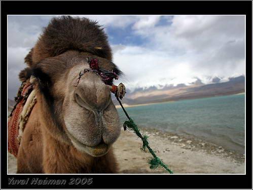 נופי הרי הקרקורם בדרך לפקיסטן