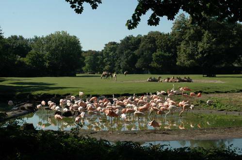 פלמינגו בגן החיות של מזרח ברלין