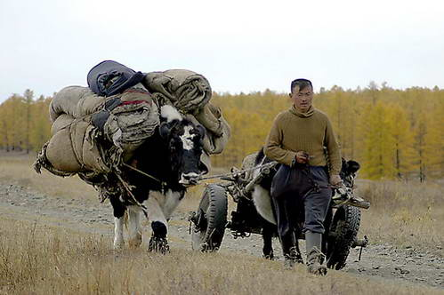 ערבות מונגוליה
