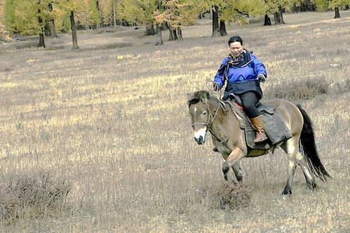 תחרות רכיבה במונגוליה