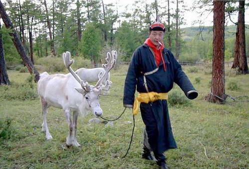 איש שבט הצאטאן עם אייל-צפון חצי מבויית