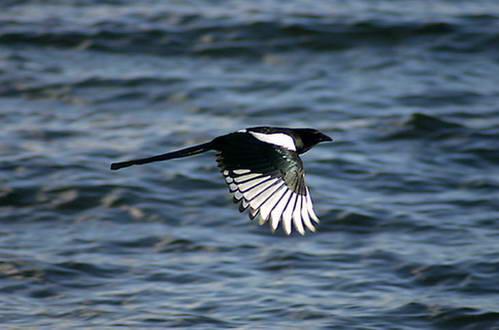 ציפור מרהיבה מעל האגם