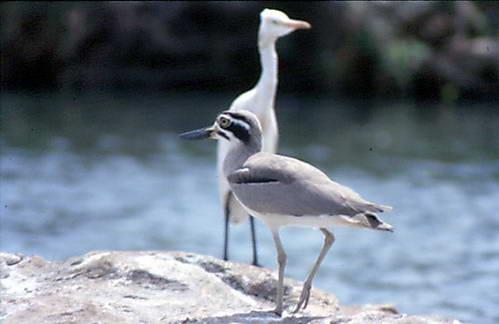 עופות המים בביצות ריו פראגוואי