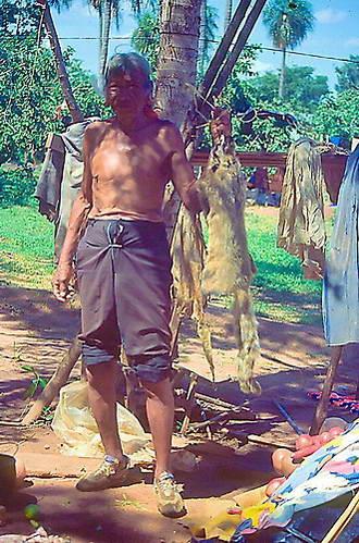 עיבוד עורות של אנשי הגווארני, פרגוואי