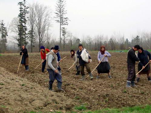 איכרים חרוצים מעבדים את שדותיהם במישורי צפון רומניה