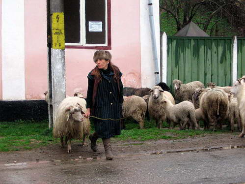 קרוב למחצית תושבי רומניה מתגוררים בכפרים