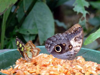 פארק הפרפרים פָפיליורמה, שוויץ