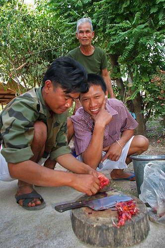 קרב תרנגולים, תאילנד