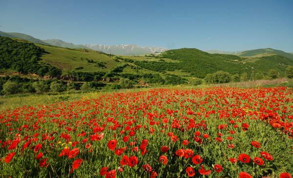 ארמניה, פריחה