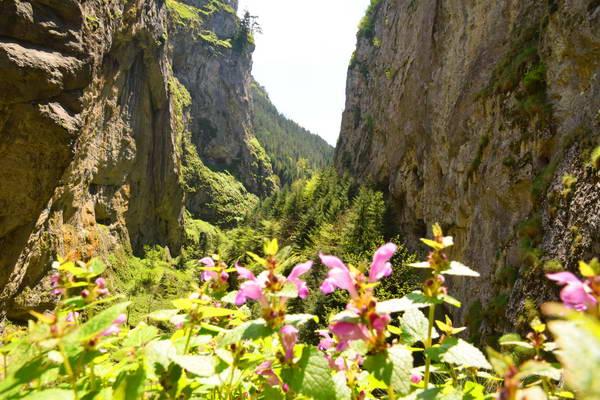 טיול ג'יפים בבולגריה, קניון טריגרד