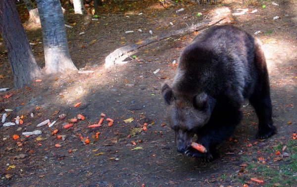 פארק הדובים, בולגריה