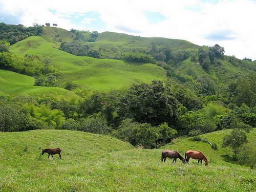 קולומביה, אזור הקפה