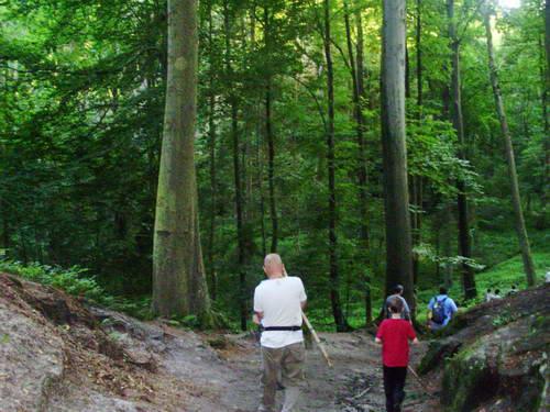 טיול רגלי ביער, צ'כיה