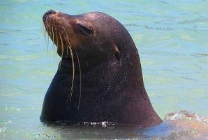 ספארי צלילה בגלאפגוס