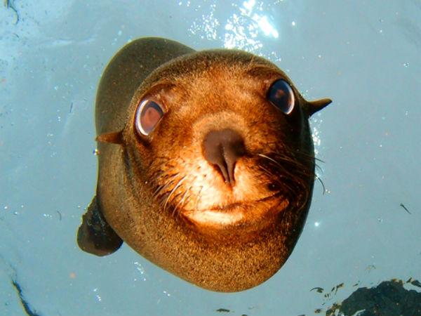 ספארי צלילה בגלפגוס