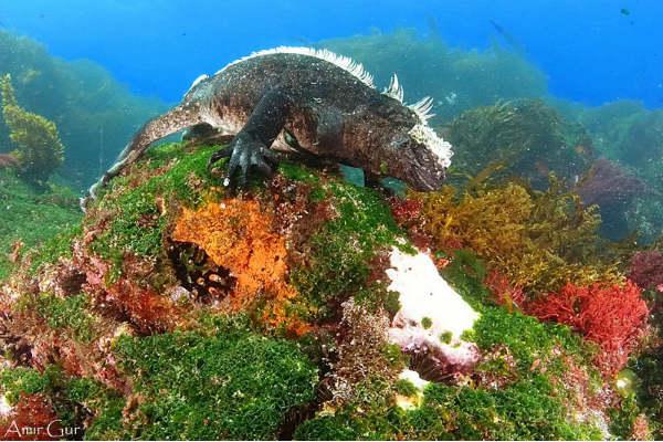 ספארי צלילה בגלפאגוס