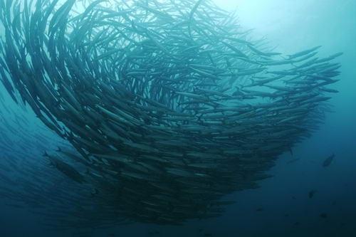 גלאפאגוס, צלילה