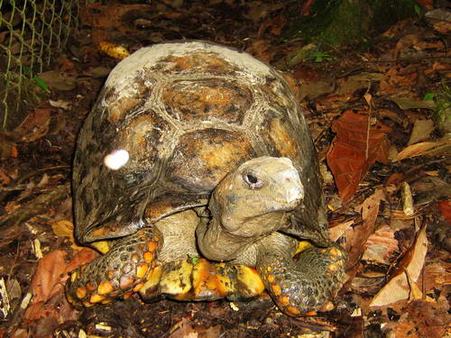 יערות האמזונס, אקוודור