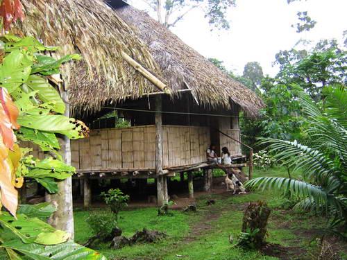 אקוודור, יערות האמזונס