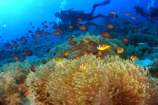 סיני מתחת למים