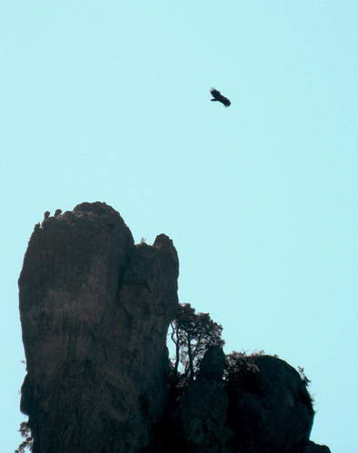 תצפית הנשרים, אחד בשמים ושלושה על המצוק