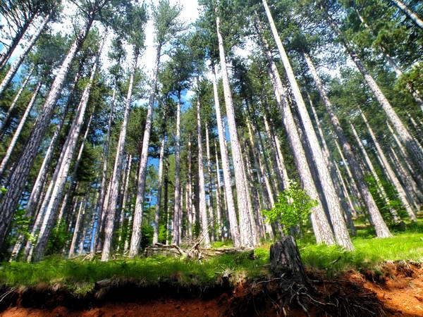 עמק ואליה קאלדה, יערות צפופים הנושקים לשמים